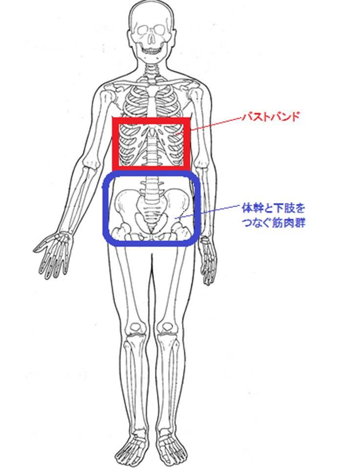 体幹と下肢を繋ぐ筋群