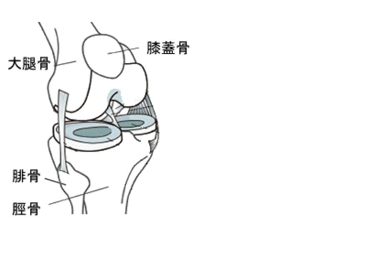膝関節を構成する骨