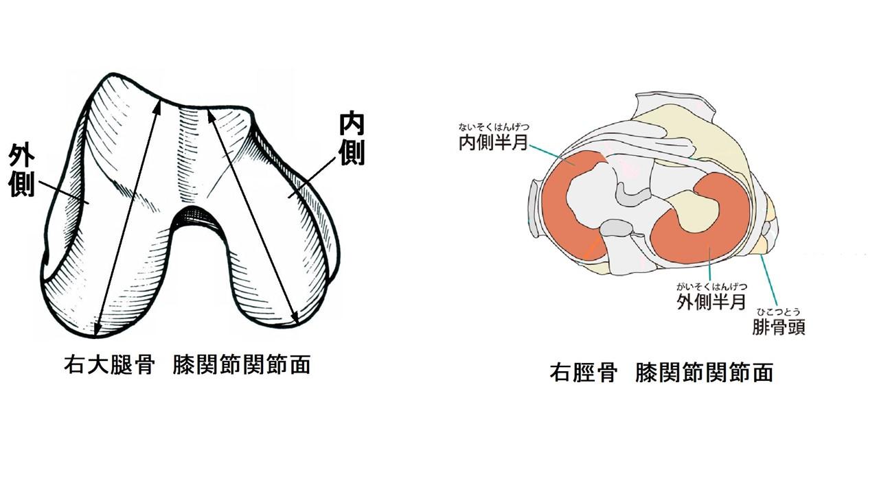 膝関節関節面